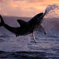 Cpt. Sharksilver